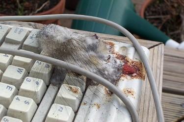 Computermuis
